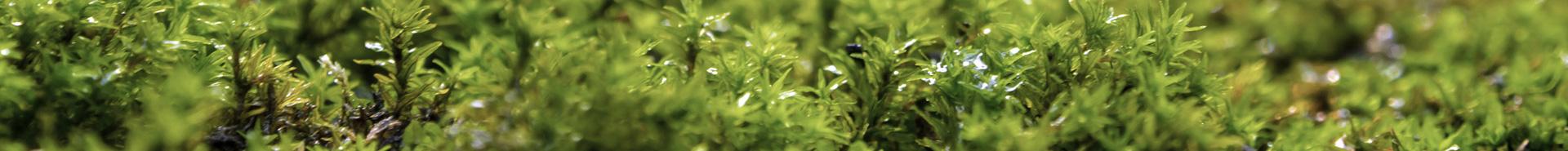 Viele kleine grüne Pflanzen