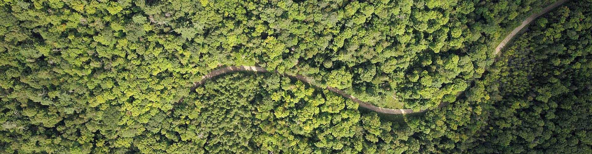 Wald - Aufnahme von oben